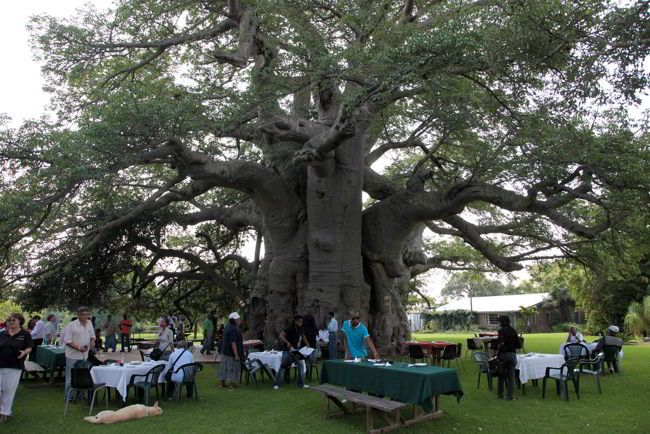 Sunland-Baobab-Tree-Limpopo-South-Africa2