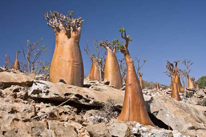 Socotra,-Yemen