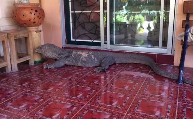 giant-lizard_650x400_51466085304