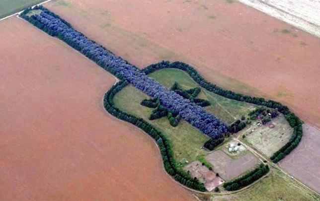 pampas_guitar
