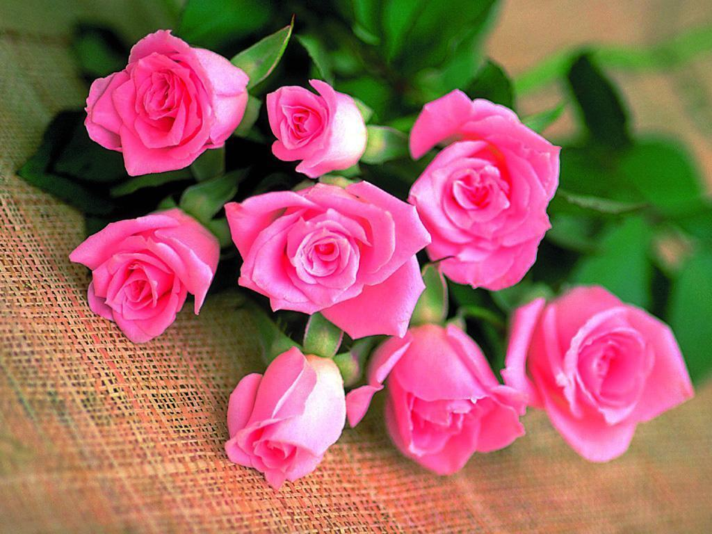 the_pink_rose_of_love_roses__hd_wallpaper_download_160109122405